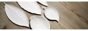 Soap Dishes & Leaf Trays